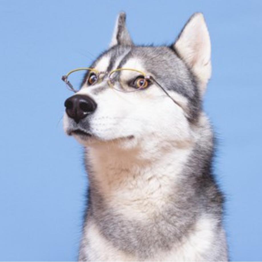 Photo of dog wearing eyeglasses.