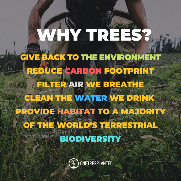 why trees